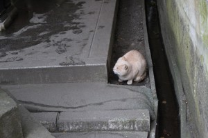 ふくよかな猫ちゃん発見!
